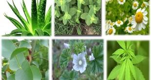 PlantasMedicinales2