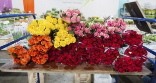 LATAM CARGO-Flores 2