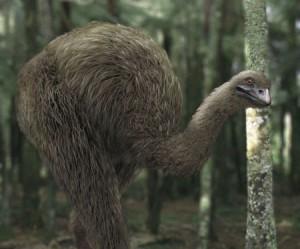 moa-gigante