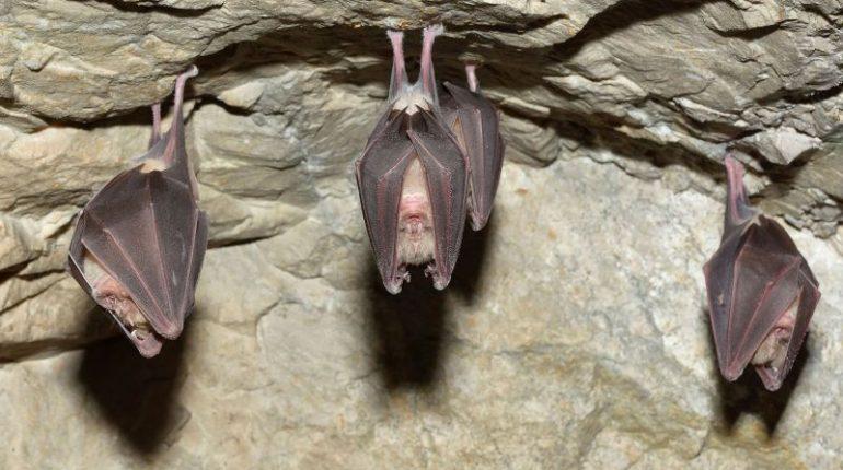 Murciélagos-durante-el-día-en-cuevas-y-no-en-casas-min-770x430