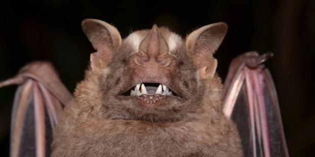 web3-brazilian-bat-vampire-brazil-shutterstock_504834766-fabio-maffei-ai